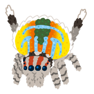bug_peacock_spider.png