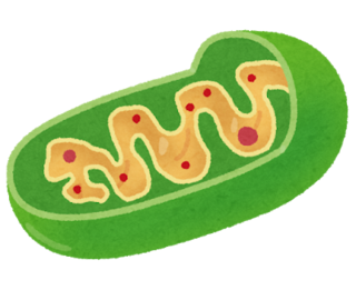saibou_mitochondria.png